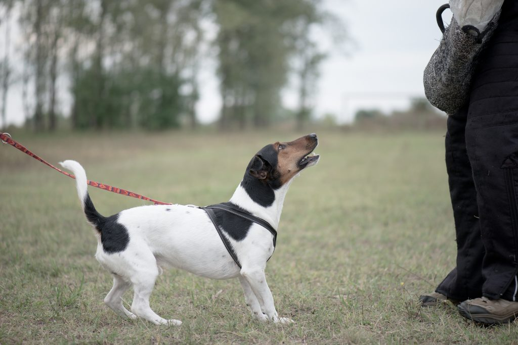 About mitigating Your Dog's Fear Researchers Find Anxiety Relief For Your Canine